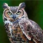 Owl Hike with MetroParks of Butler County